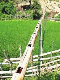 bambu irrigar