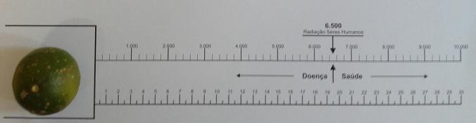Biômetro de Bovis